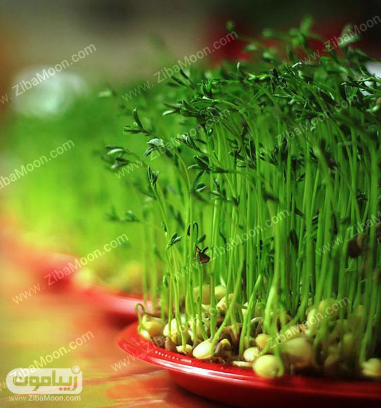 سبزه عید