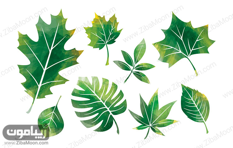 برگ های سبز