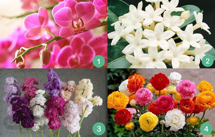 گل ارکید استفانوتیس استوک آلاله