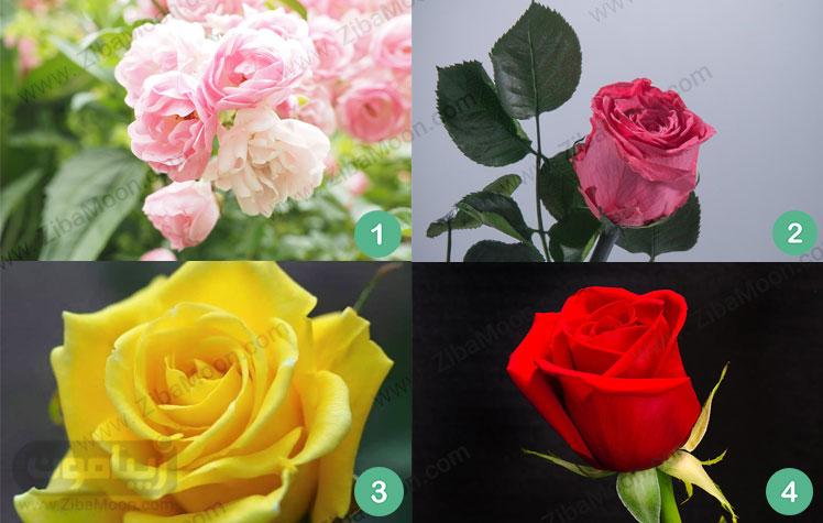 گل رز صورتی روشن رز صورتی تیره رز قرمز رز زرد