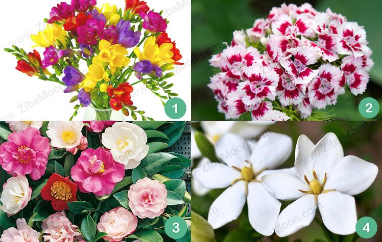 گل فریزیا قرنفل کاملیا گاردنیا
