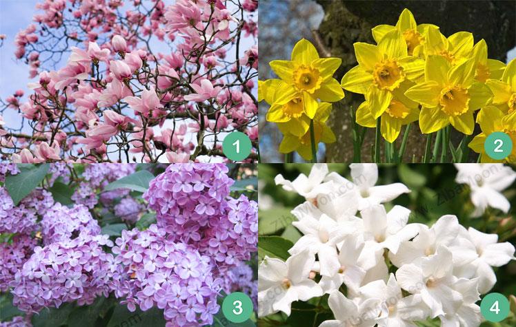 گل ماگنولیا نرگس زرد یاسمن بنفش یاس سفید
