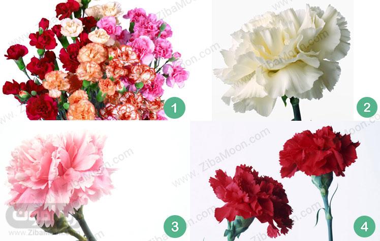 گل میخک میخک قرمز میخک صورتی میخک سفید