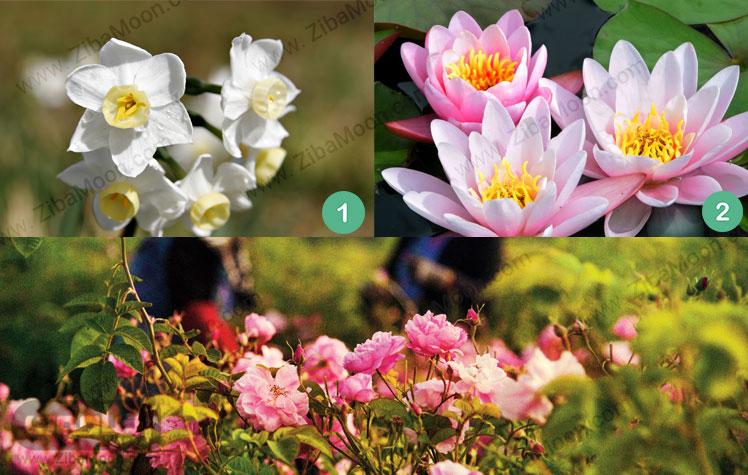 گل نرگس سفید و نیلوفر آبی