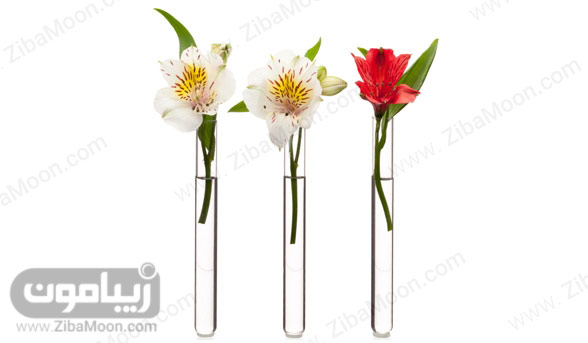 گل در شیشه آزمایش