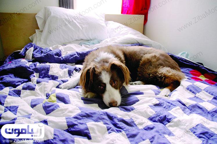 حیوان در اتاق خواب ممنوع