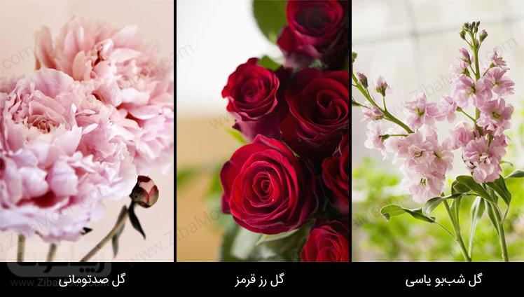 گل صدتومانی، گل رز قرمز، گل شب بو یاسی