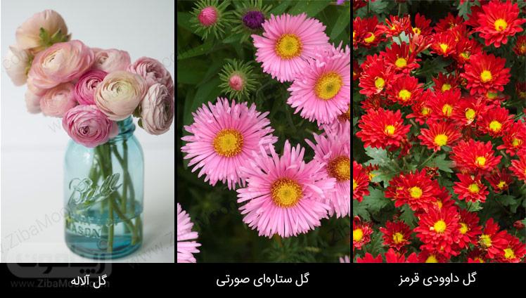 گل داوودی قرمز، گل آلاله، گل ستاره ای صورتی