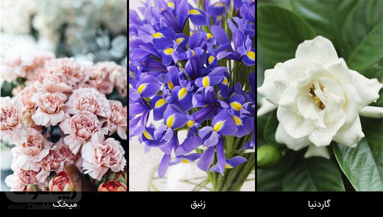 میخک، زنبق، گاردنیا