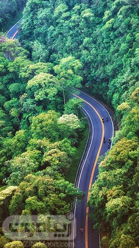 تصویر پس زیمنه جنگل و جاده برای گوشی موبایل