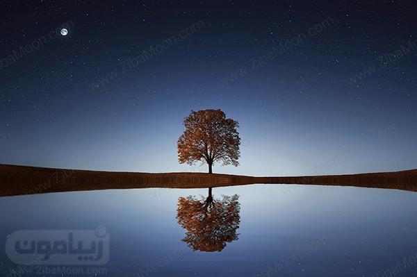 تصویر زمینه درخت برای کامپیوتر