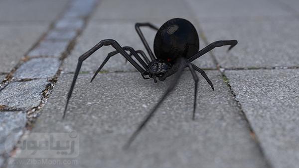 عکس بک گراند عنکبوت برای لپ تاپ
