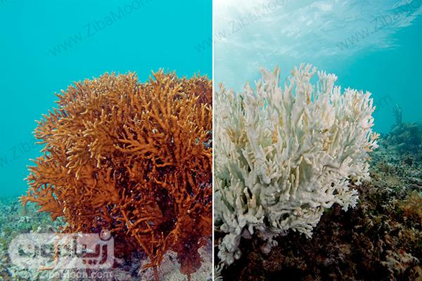 تغییر رنگ مرجان ها بعد از مرگ