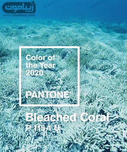 , رنگ سال 2020 و 99 چیست؟ + عکس