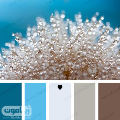 پالت رنگی زیبا با الهام از طبیعت