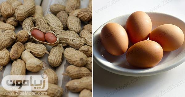 مواد غذایی پروتئینی