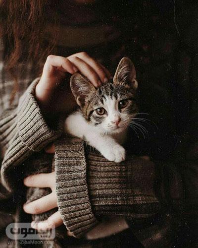 عکس پروفایل پاییزی با گربه ملوس