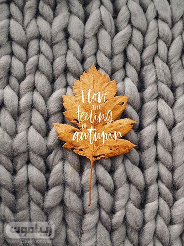 عکس برگ پاییزی زیبا برای پروفایل