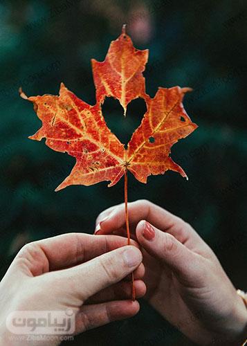 پروفایل دو نفره عاشقانه با برگ پاییزی