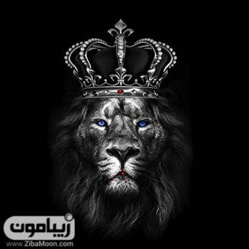 تصویر رپوفایل پسرانه شیر شاه