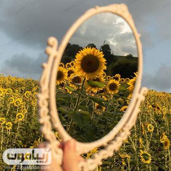 عکس پروفایل گل آفتابگردان در آینه