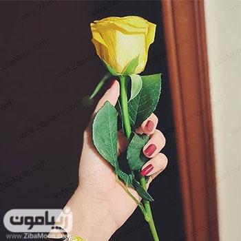 عکس پروفایل دخترانه با یک شاخه گل رز زرد