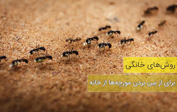 روش های خانگی برای از بین بردن مورچه ها از خانه