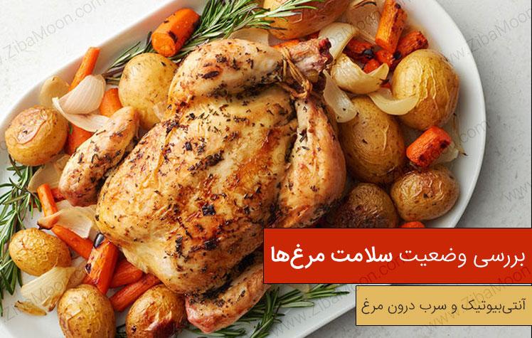 بررسی سلامت مرغ، مرغ سربی یا آنتی بیوتیکی