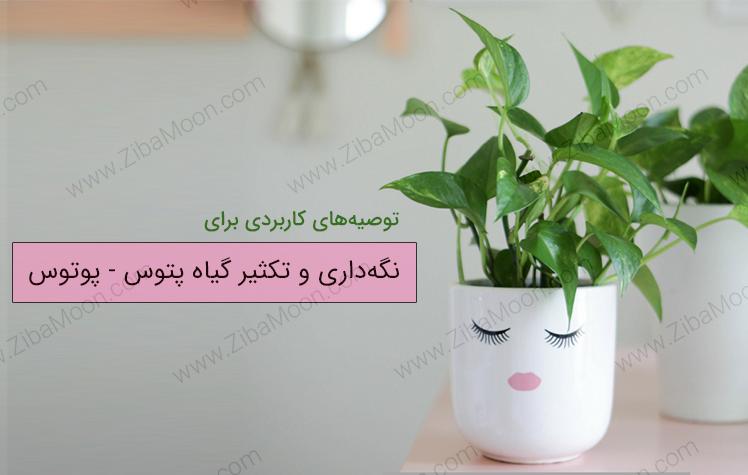توصیه های عالی و کاربردی برای نگه داری گیاه پتوس یا پوتوس